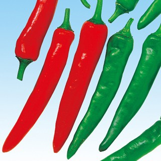 トウガラシの種 大紅とうがらし 小袋