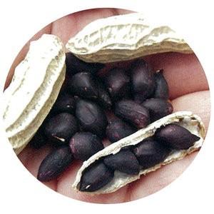 黒落花生 (落花生の種) 小袋 約20ml(約13粒)