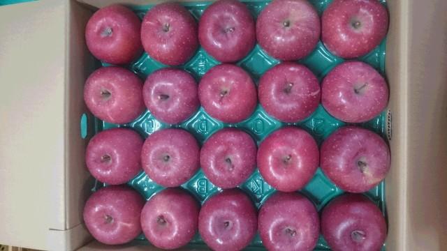 りんご サンふじ 山形県産 贈答用 5kg 特秀 中玉 16玉〜20玉入り 予約商品