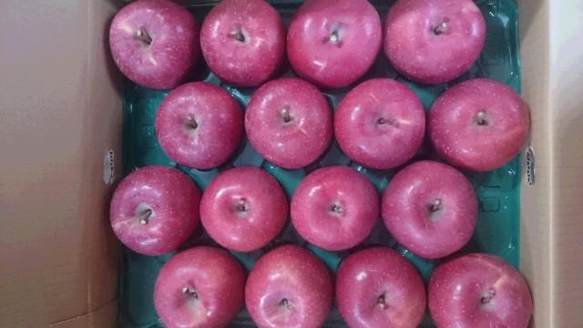 りんご サンふじ 山形県産 贈答用 5kg 特秀 大玉 12玉〜14玉入り 予約商品