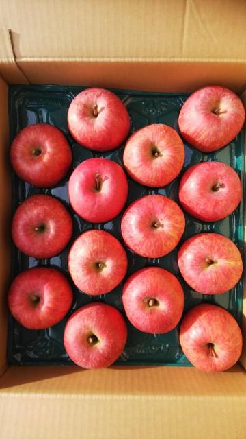 りんご サンふじ 山形県産 自宅用 5kg 秀 大玉 12玉〜14玉入り 予約商品