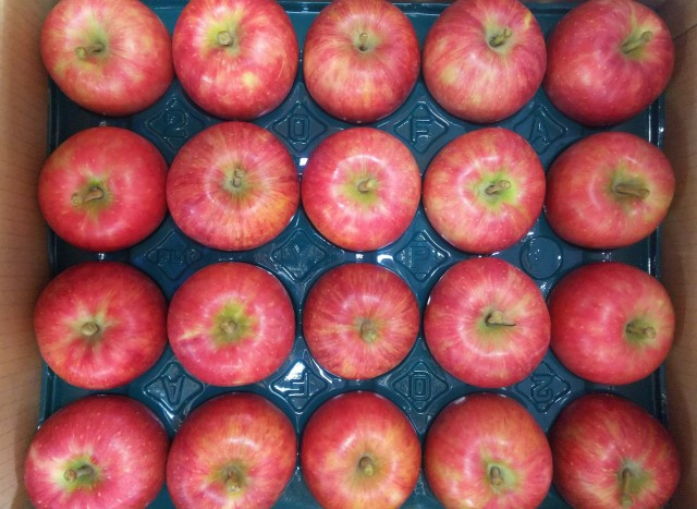 りんご 千秋 山形県産 10kg 特秀 28玉〜40玉入り 予約商品