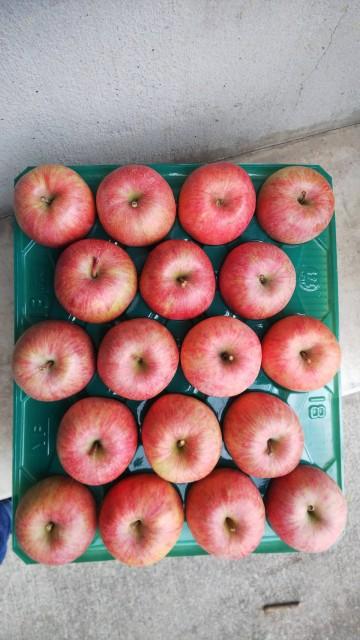 りんご サンふじ 山形県産 自宅用 10kg 秀 中玉 32玉〜40玉入り 予約商品
