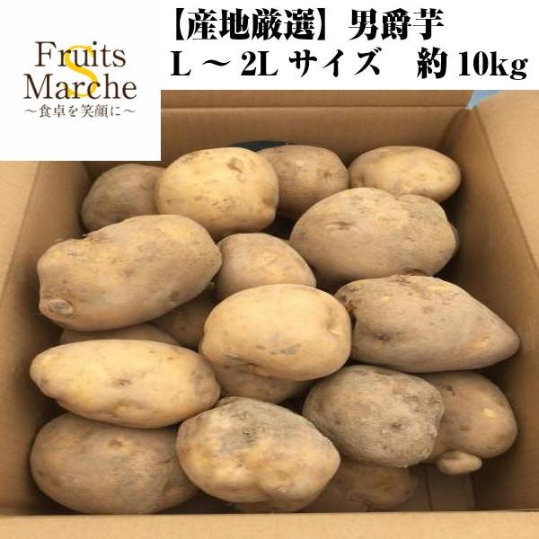 【送料無料】【産地厳選】男爵芋 L〜2Lサイズ 約10kg(北海道沖縄別途送料加算)男爵いも/だんしゃくいも/ジャガイモ/じゃがいも/芋/ば