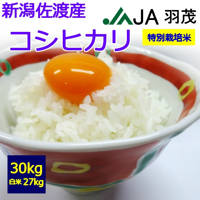 【特別栽培米】【令和2年産】【送料無料】【白米】佐渡産 コシヒカリ 30kg  お取り寄せ 30キロ  お米 JA羽茂 はもち