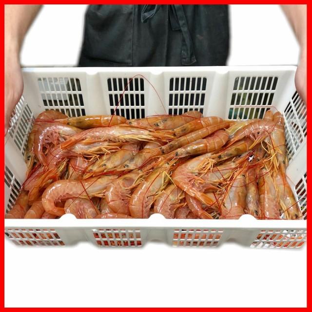 赤 えび 2kg(サイズ20/30 約40-60尾)【ボタン海老にも負けない甘さです】刺身・寿司・焼物・揚物などにお使いください【冷凍便】