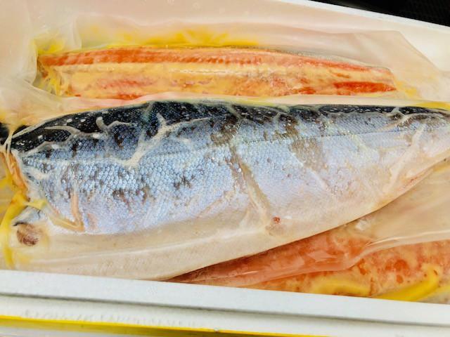 銀鮭 西京漬け 8kg(7枚前後)【業務用・脂あります】熟成みそ仕立て【冷凍便】