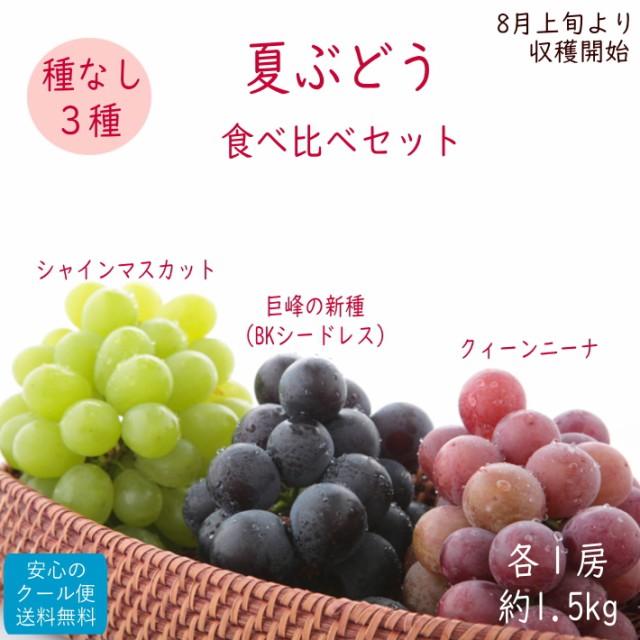 【予約】種無しぶどう3色セット約1.5kg (化粧箱ギフト)【8月中旬頃から収穫開始】