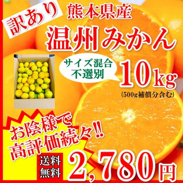 みかん 温州みかん 訳あり 熊本県産 3Sサイズ以上 不選別 10kg (500g補償付き) 送料無料 蜜柑 ミカン 果物 フルーツ