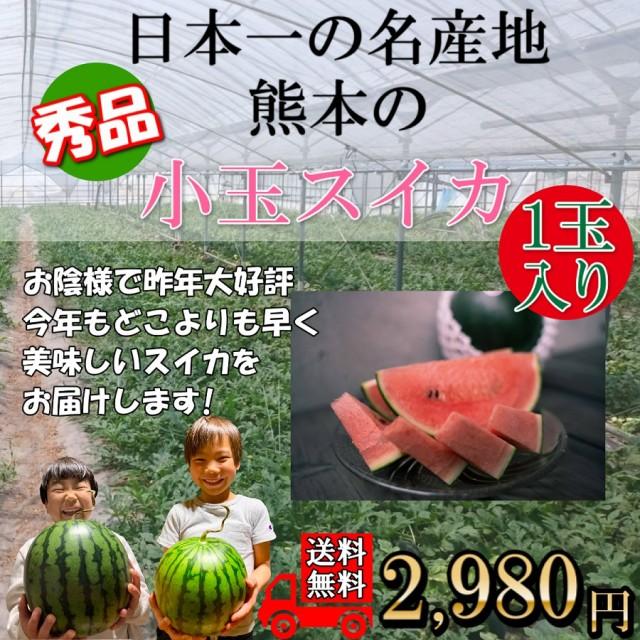 すいか 熊本産 小玉スイカ 1玉 3Lサイズ以上 秀品 送料無料 贈り物 ギフト 贈答 4月中旬より発売予定