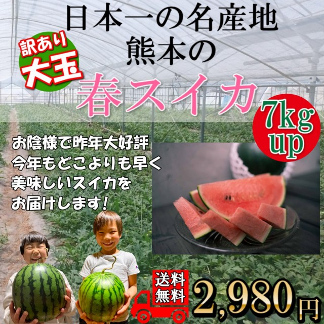 すいか 訳あり 熊本産 大玉スイカ 1玉 7kgup 送料無料 家庭用 4月上旬より発売予定