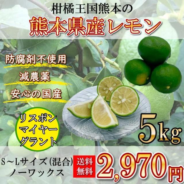 レモン 国産レモン 熊本県産 5キロ S~Lサイズ 送料無料 防腐剤不使用 減農薬 リスボン マイヤー グラント 柑橘