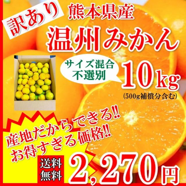 みかん 温州みかん 訳あり 熊本県産 3Sサイズ以上10kg 500g補償付き 送料無料 蜜柑 ミカン 果物 フルーツ 10月25日より発売予定