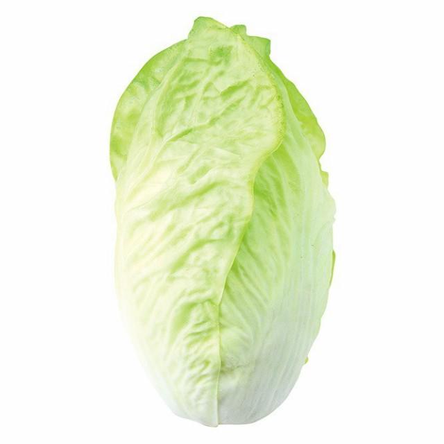 白菜 食品サンプル[G-L]