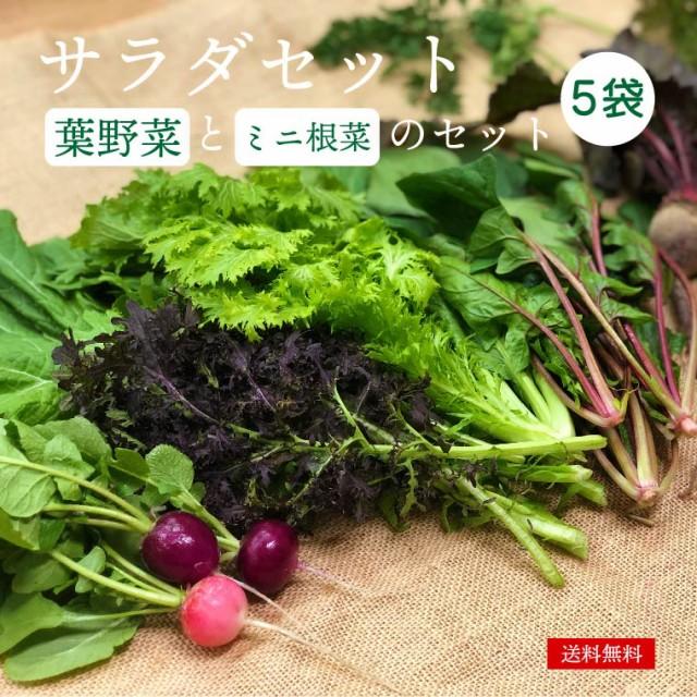 サラダセット 無農薬野菜 サラダ セット 化学肥料・農薬不使用 ミニ根菜つき わさび菜 水菜 ほうれん草 こまつな 無農薬野菜