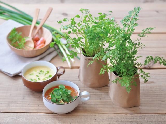 育てるスープ 栽培キット 発芽保障 パクチー ミニキャロット 人参 青ネギ ほうれん草 香草 栽培セット 聖新陶芸