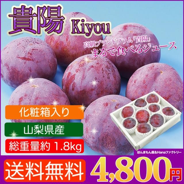お中元 ギフト 送料無料 山梨県産 最高級プラム 貴陽 約1.8kg フルーツギフト のしOK