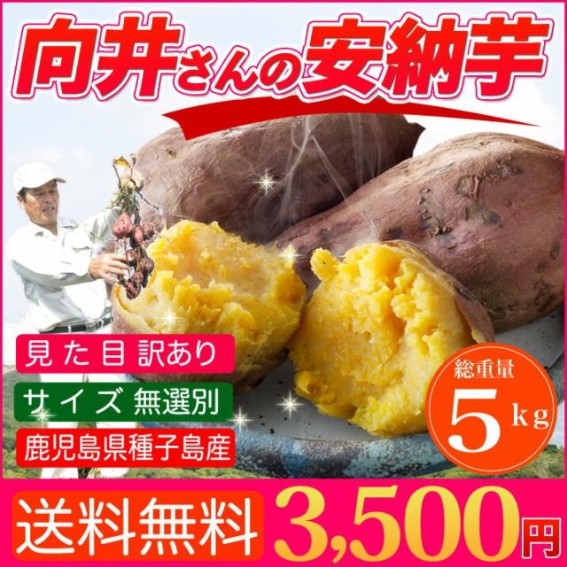 さつまいも 安納芋 訳あり 5kg 送料無料 鹿児島 種子島産 無選別 焼き芋や干し芋にも