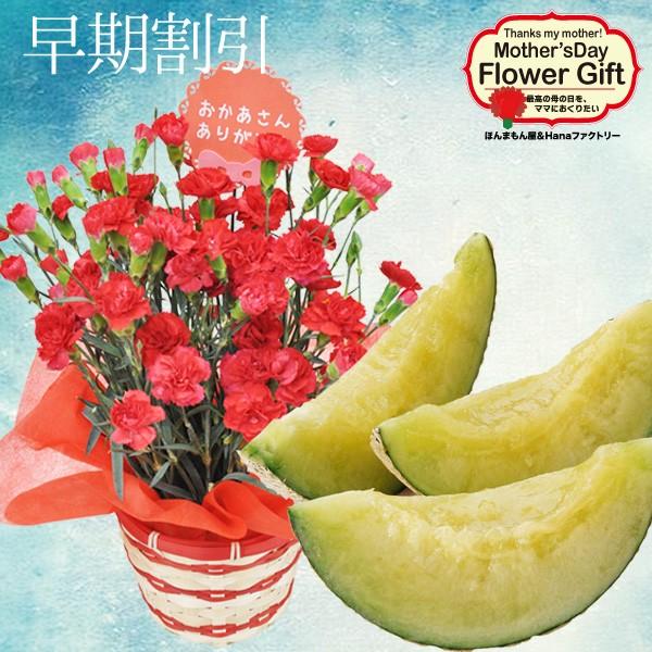 母の日 フルーツ ギフト カーネーション 鉢植え と アールスメロン の セット 母の日ギフト 2020 花とセット プレゼント
