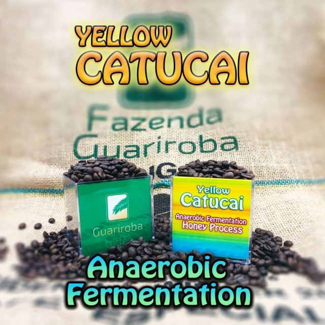 YELLOW CATUCAI - Anaerobic Fermentation Honey 嫌気性発酵ハニー ナッティーシリーズ スペシャルティコーヒー豆 200g 送料無料 ブラジ