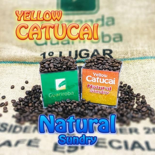 YELLOW CATUCAI - Natural スイート スペシャルティコーヒー豆 200g 送料無料 ブラジルグアリロバ農園