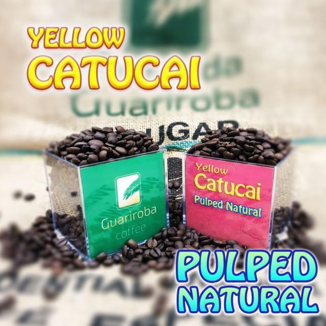 YELLOW CATUCAI - Pulped Natural フルーティーシリーズ スペシャルティコーヒー豆 200g 送料無料 ブラジルグアリロバ農園