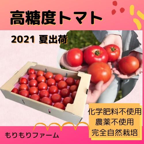【7月発送】農薬・化学肥料不使用 高糖度トマト 3kg 安心安全青森県産