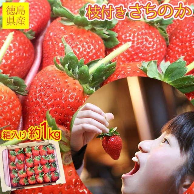 送料無料 徳島県産 徳島産 いちご イチゴ 枝付き さちのか 幸の果 苺 秀品 箱入り 1kg 前後 秀品 ご家庭用 いちご ケーキ チョコ ギフト