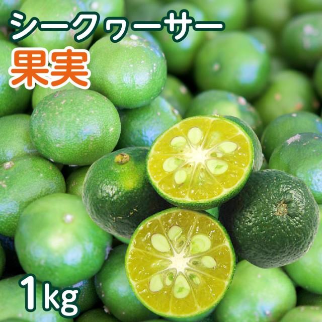 【送料無料】 沖縄県産 青切り シークワーサー果実 約1kg(約40個〜50個前後)