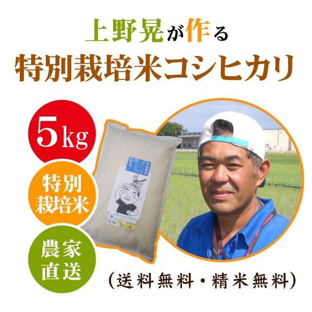 【活力ある田んぼで作る】上野晃が作る 特別栽培米 コシヒカリ 5kg 【送料無料 ※沖縄へは別途送料】 玄米 減農薬 米 5キロ お米 5kg 農