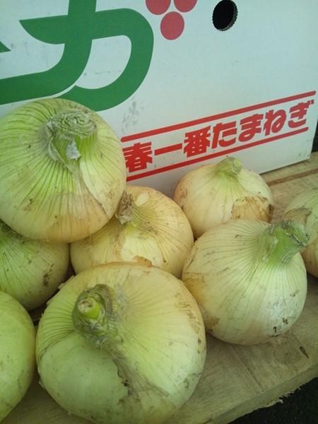 新たまねぎ・たまねぎ 佐賀県産 1ケース 約5kg