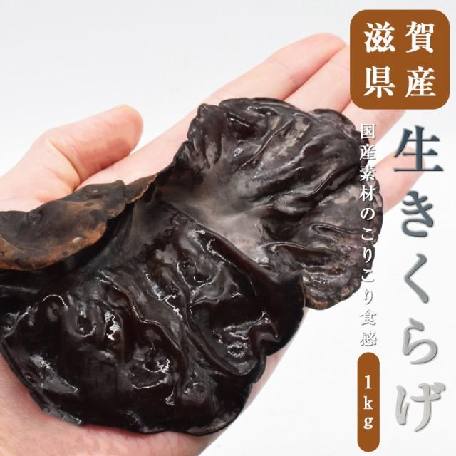 生きくらげ 1キロ 純国産 きくらげ 肉厚 キノコ 滋賀県産 食物繊維 ビタミンD 腸活 国産きくらげ