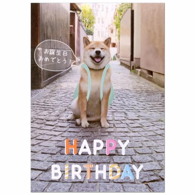 バースデーカード ポップアップカード 柴犬まる 道 二つ折り B32-067 学研ステイフル 立体カード 飛び出す グリーティングカード Birthda
