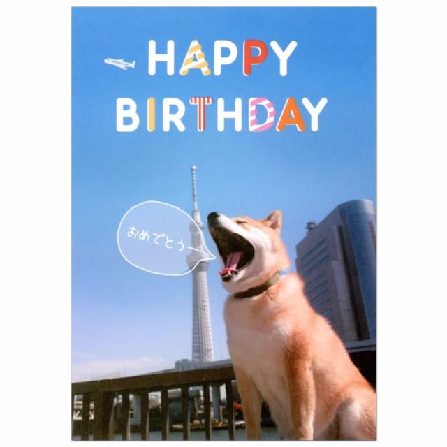 バースデーカード ポップアップカード 柴犬まる 青空 二つ折り B32-068 学研ステイフル 立体カード 飛び出す グリーティングカード Birth