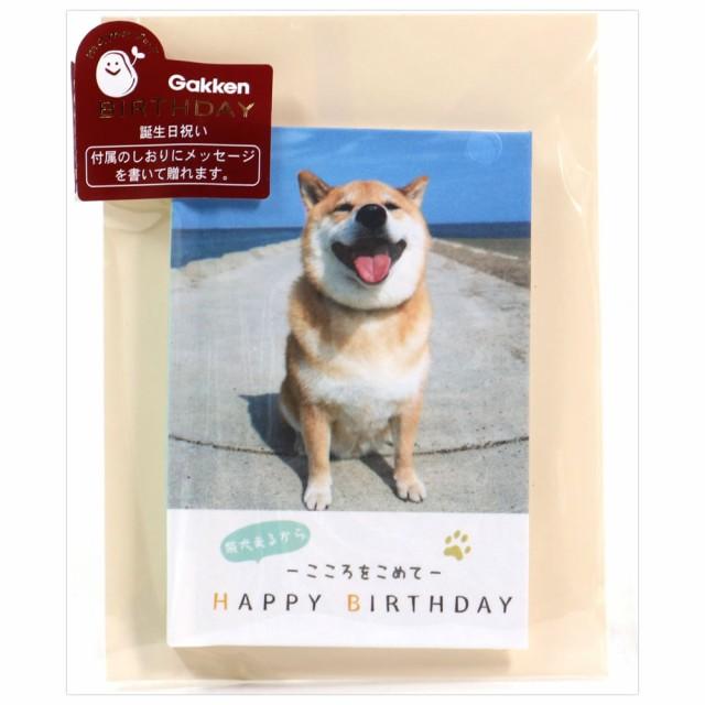 バースデーカード メッセージブック 豆ブック 柴犬まる B50-123 しおり付き 学研ステイフル 郵送不可 グリーティングカード Birthday Car