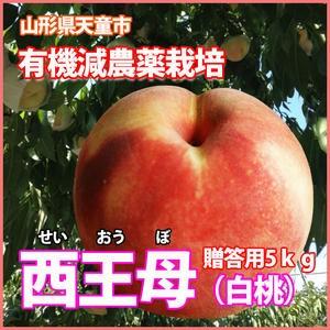 桃 白桃 西王母 送料無料 国産 ギフト 山形 【 西王母 秀 5kg 満杯詰 ( 9月下旬〜10月上旬 )】 フルーツ もも 家庭用 白桃 5kg 農産