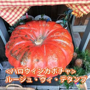 ハロウィン かぼちゃ カボチャ 生かぼちゃ ルージュヴィデタンプ 小 2個 おばけかぼちゃ パンプキン 飾り 巨大 置物 装飾 オブジェ パン