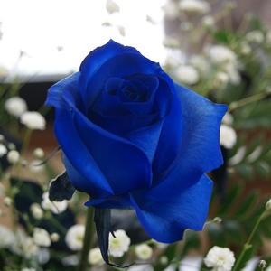 青いバラ ブルーローズ 【 追加用ブルーローズ1本(単品購入不可) 】 誕生日 プレゼント 青バラ 花束 青い薔薇 青薔薇 花 結婚記念日 送
