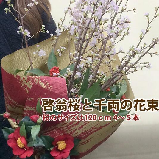 啓翁桜 山形 千両 桜 花束 山形 特級120cm 4〜5本入り 桜の長さは豪快に飾れる長さ さくら 送料無料 切花 花 プレゼント アレンジメン