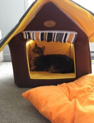 ペットハウスストライプリムーバブルカバーマット犬小屋ベッドペット犬猫ドッグdogcatキャットフェレット家おしゃれ