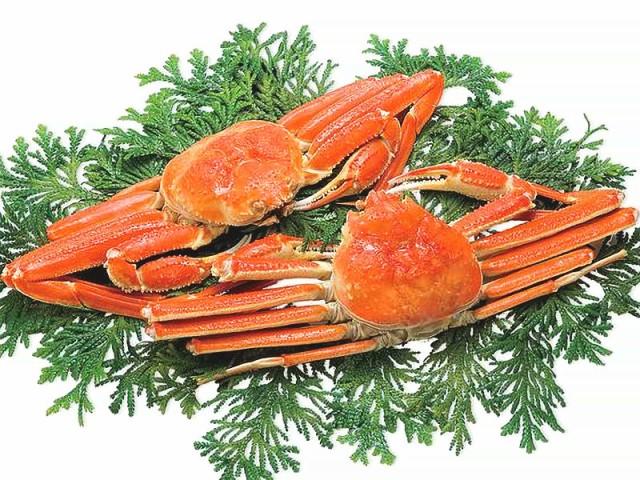 送料無料 ずわいがに 姿 蟹 ギフト 「ズワイガニ姿 2尾 約1kg」 ギフト カニ 蟹 かに ずわいがに ずわい蟹 ズワイ蟹 ズワイガニ 海鮮 海