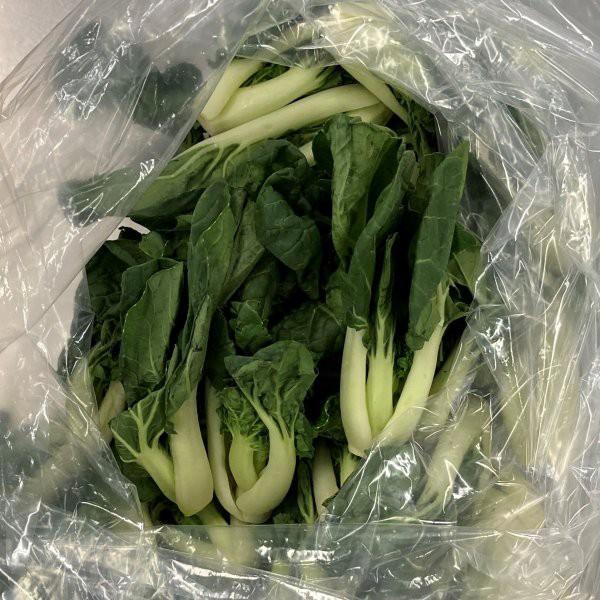 広東白菜(カントンパクチョイ)1kg