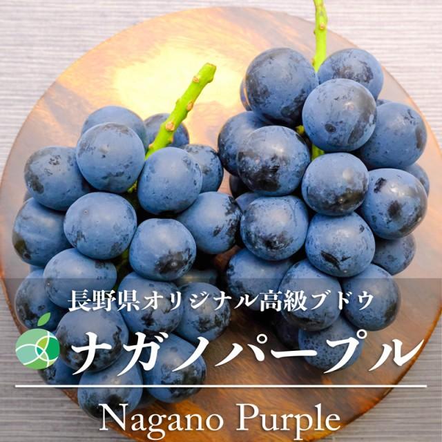 送料無料 ナガノパープル ぶどう ハウス栽培 約2kg 4房 長野県産