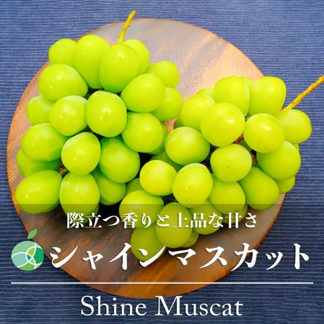 送料無料 シャインマスカット ぶどう ハウス栽培 約1kg 2房 長野県産