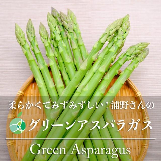 送料無料 浦野さんのグリーンアスパラガス 約1kg L〜2L 30〜40本 長野県・須坂市産
