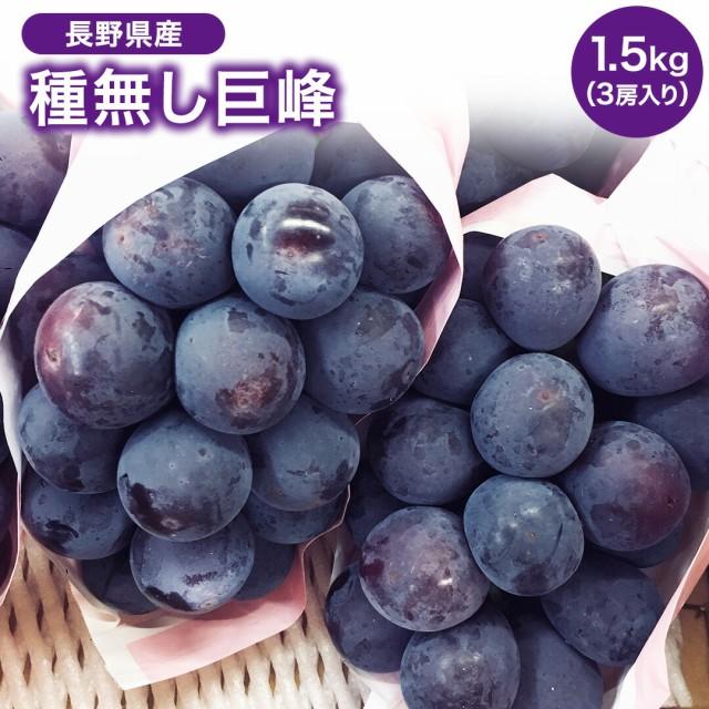 長野県産 種無し巨峰 3房入り 1.5キロ 巨峰 種無し フルーツ ギフト プレゼント 送料無料