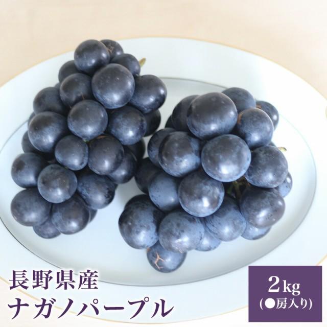長野県産 ナガノパープル 2キロ(2房入り) 巨峰 種無し フルーツ ギフト プレゼント 送料無料