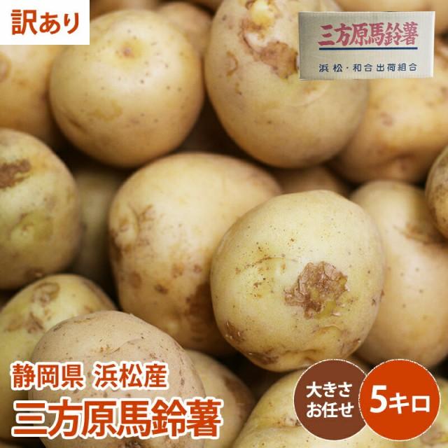 【静岡県 浜松産】【訳あり】三方原馬鈴薯 5kg じゃがいも 野菜 ジャガイモ 送料無料