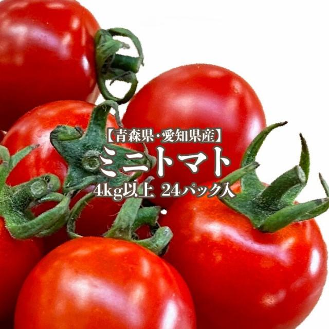 【青森・愛知県産】ミニトマト 24パック入り 約4.8kg 1パック200g入り 送料無料 トマト お弁当 サラダ 野菜