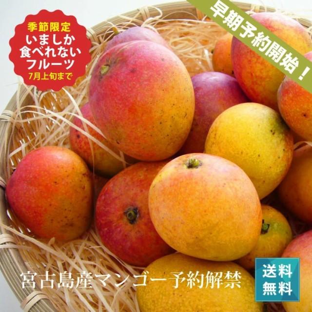 ミニマンゴー1kg(5玉〜20玉)朝獲りもぎたて 沖縄県宮古島産 マンゴーの収穫量日本一の宮古島より直送